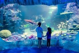 photo of children looking at the tank in Sea Life